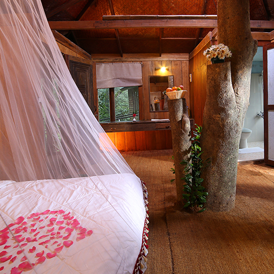 tree house packages
