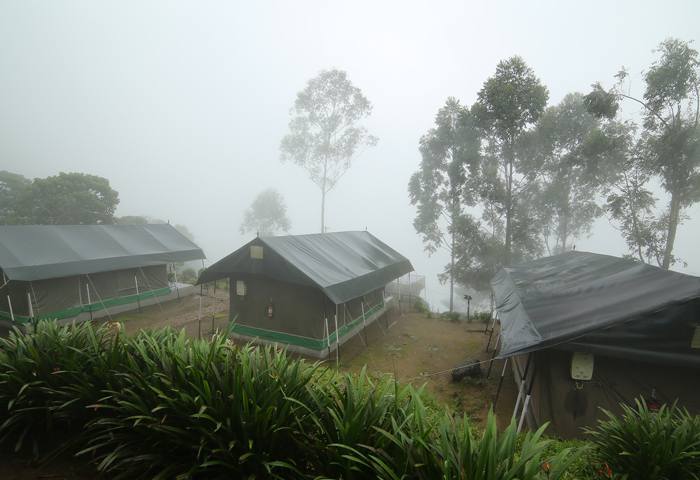 Best Tent House Stay In Munnar